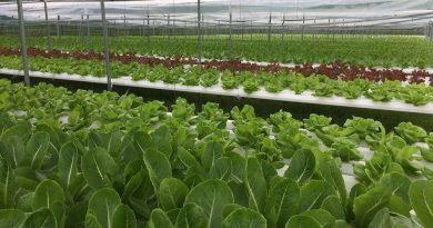 Cặp đôi 8X Đà Nẵng – Quảng Nam khiến nhiều người 'ngã ngửa' khi quyết định bỏ phố về quê trồng rau thủy canh