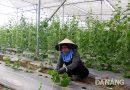 Nông nghiệp công nghệ cao: Hướng đi tất yếu nhưng hiệu quả chưa cao