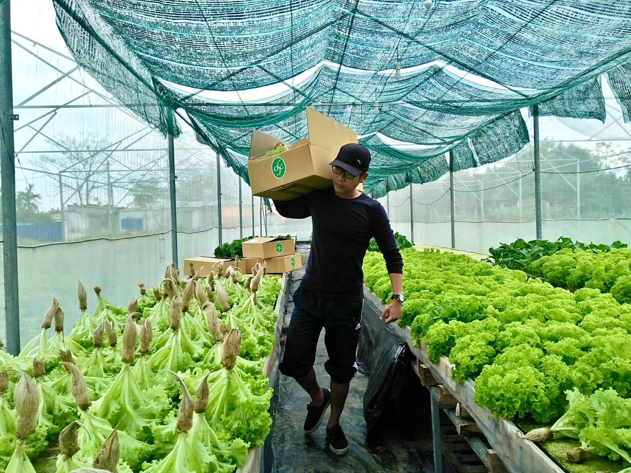 Mô hình khởi nghiệp rau thuỷ canh hướng đến bảo vệ môi trường đất tại địa phương